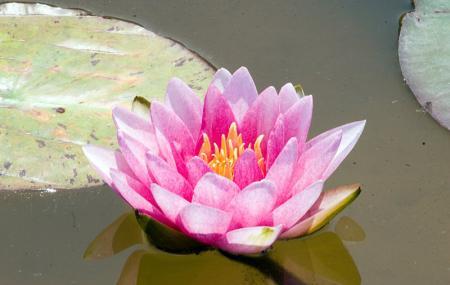 Lilypons Water Garden Image