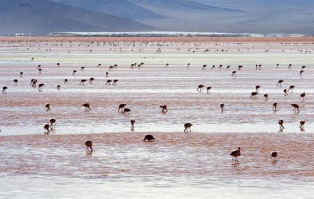 Laguna Colorada Image