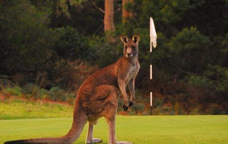 Anglesea Golf Club Image