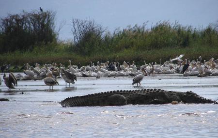 Nechisar National Park Image