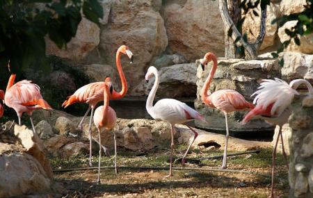 Pafos Zoo Image