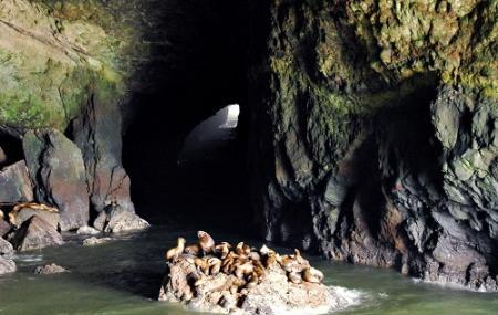 Sea Lion Caves Image