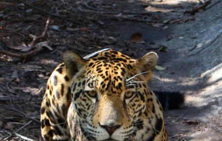 The Belize Zoo Image