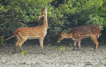 Bhitarkanika National Park Image