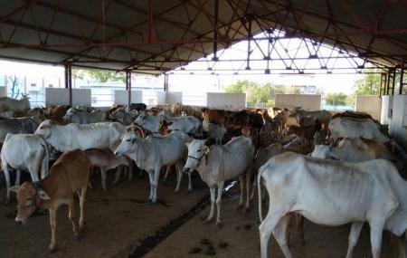 Hariom Baba Gaushala Aashram Trust Lasanpur Nagpur Image