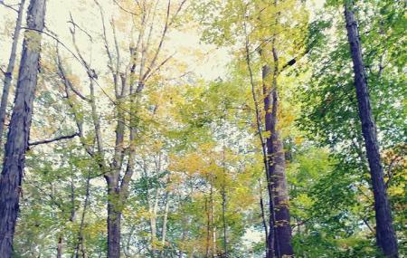 Longwood Park Image