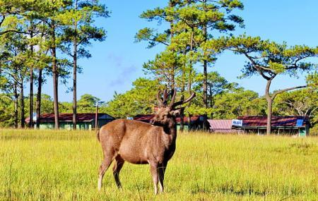 Phu Kradueng National Park Image