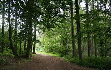 Cann Woods Image
