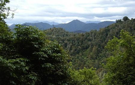 Te Urewera Image
