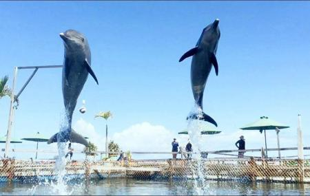 Dolphin Lodge Bali ( Official ) Image