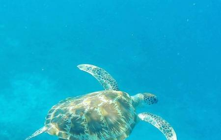 Gili Meno Turtle Sanctuary Image