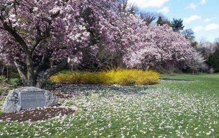 Glendinning Rock Garden Image