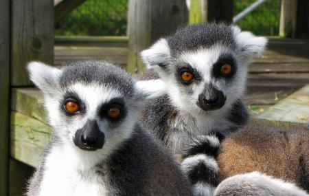 Magnetic Hill Zoo Image