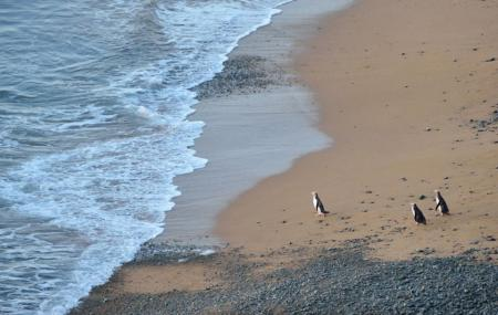 Bushy Beach Scenic Reserve Image