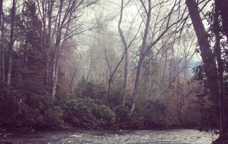 Davidson River Campground Image