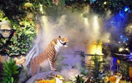 Rainforest Cafe Shop-animal Kingdom Image