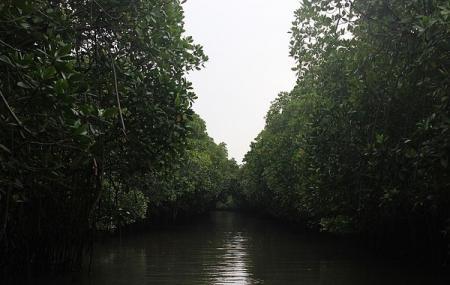 Pichavaram Mangrove Forest Image