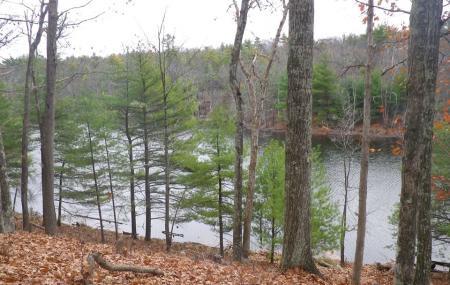 Bluestone Wild Forest Image