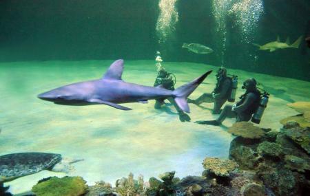 Shark Reef Aquarium Gift Shop Las Vegas Ticket Price Timings Address Triphobo