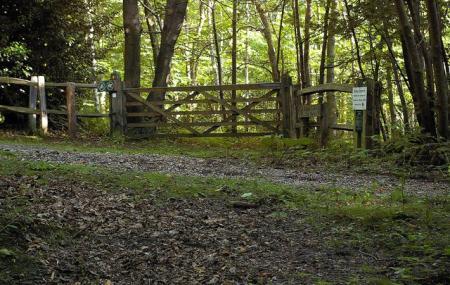 Farningham Wood Nature Reserve Image