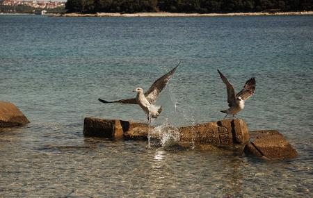 Brijuni Islands Image