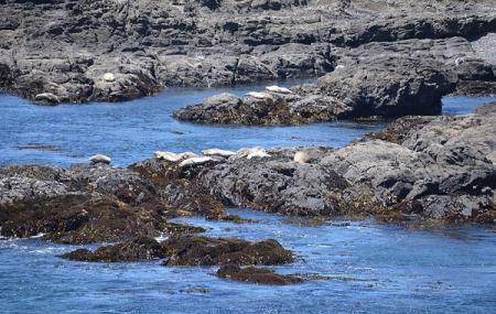 Green Cove Harbor Seal Rookery Image