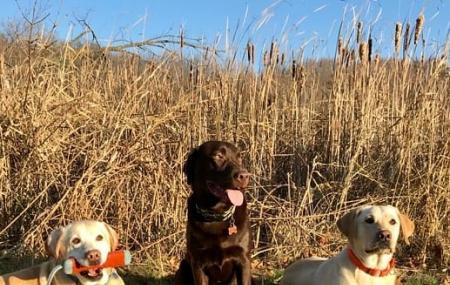 Carver Park Reserve Off-leash Dog Park Image