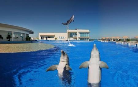 Dolphin Conservation Center At Marineland Image