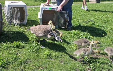 Fox Valley Wildlife Center Image