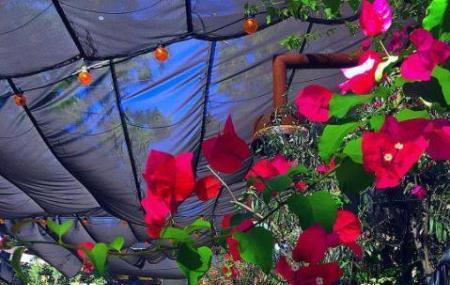 Bo-beau Kitchen-garden Image