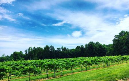 The Natchez Hills Vineyard (middle Tennessee Wedding Venue) Image