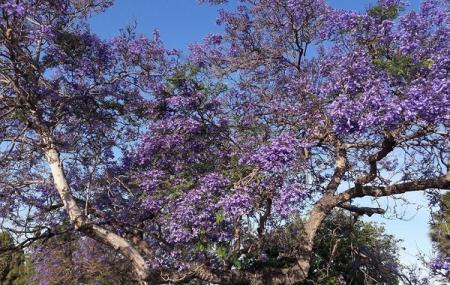 El Toyon Park Image