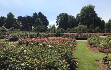 Queen Mary's Rose Gardens Image