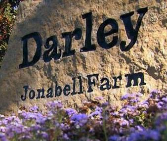 Darley At Jonabell Farm Image