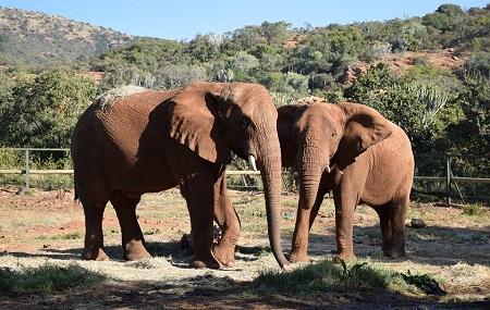 The Elephant Sanctuary - Hartbeespoort Image