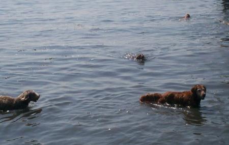 Larchmont Dog Beach Image