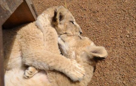 Ukutula Lion Park Image