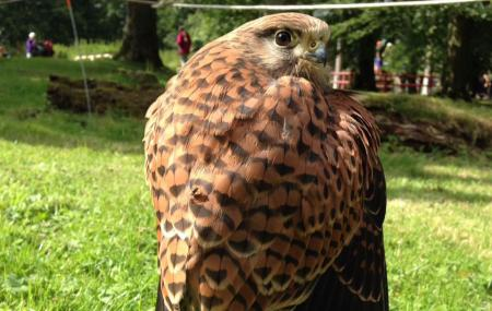 Cumberland Bird Of Prey Centre (thurstonfield) Image