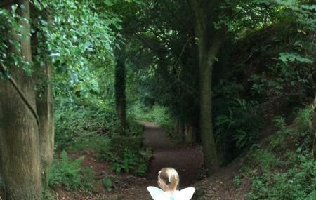 Secret Forest, Stockwood Scowles Image