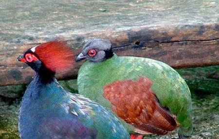 Florida International Teaching Zoo Image