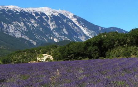 Provence Image