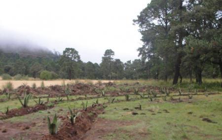 Jardin De Mayahuel Image