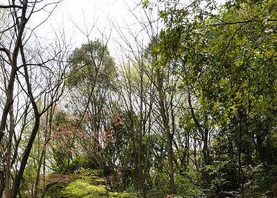 Kirigaoka Park Image