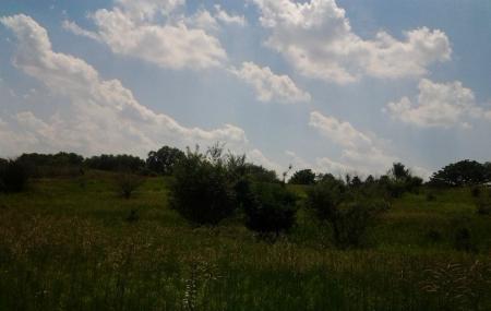 Merritt Prairie Forest Preserve Image