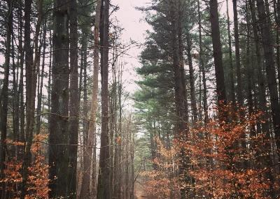Morgan-monroe State Forest Image