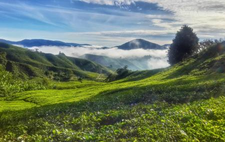 Cameron Highlands Discover The History Image