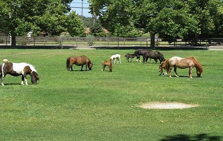 Quicksilver Ranch Image