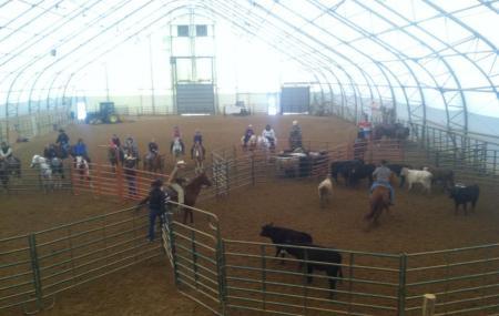 Kentucky Cowtown Image
