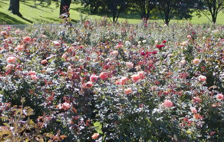 Lake Harriet Rose Garden Image