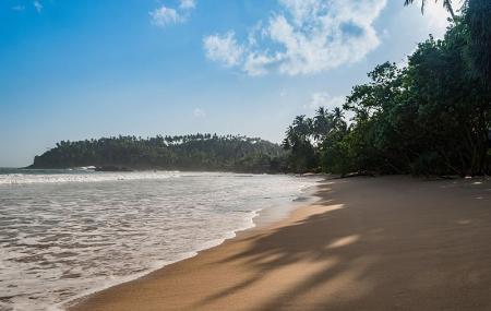 Mirissa Beach Image